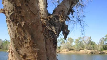 Water feeds Wood