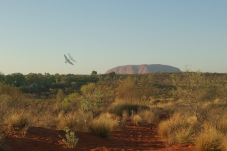 Magpie flying Uluru w