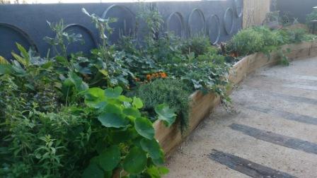 Dear Delicious organic garden