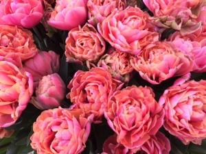 pink flowers gudrun